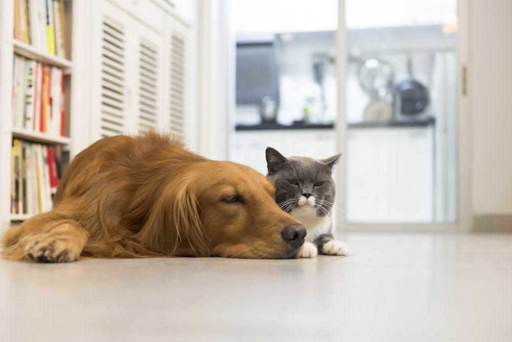 141212 Alergia A Caes E Gatos Por Que Acontece E Como Evitar