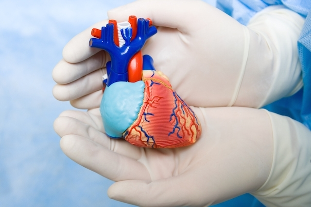 Como Acontece O Sopro No Coração?