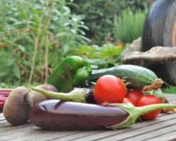 Alimentos Orgânicos Permitem Maior Qualidade De Vida