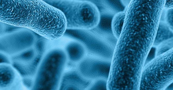 Lactobacillus Gasseri: Priorizando A Saúde Do Intestino