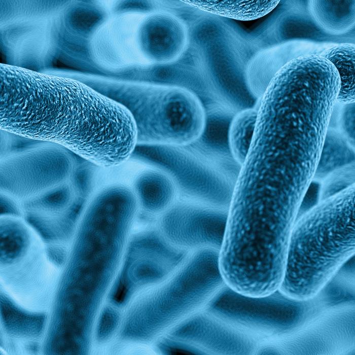 Lactobacillus Gasseria Resenha