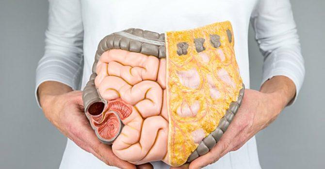 Cinco Hábitos Que Melhoram O Funcionamento Do Intestino