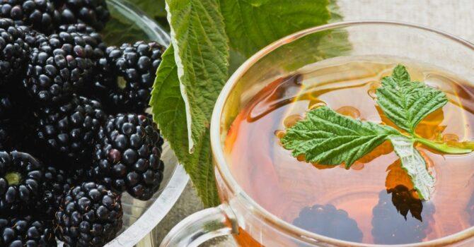 Chá De Amora: Confira Como Usar E Seus Benefícios