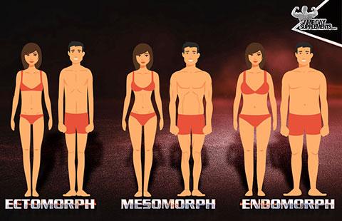 Quais As Características De Ectomorfo, Mesomorfo E Endomorfo?